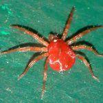 La Araña Roja: ¿Qué es? ¿Cómo la identificamos? ¿Cómo podemos combatirla?
