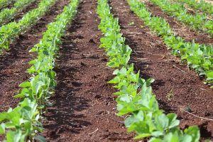 Secante de todo tipo de cultivos