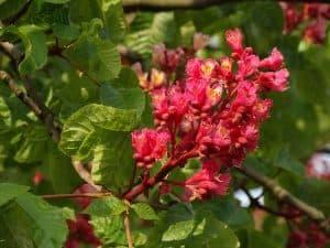 Significado de las flores de Bach