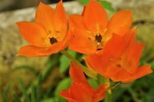 Significado de las flores naranjas