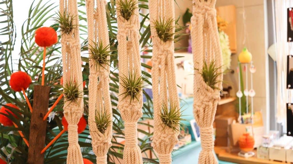 Tillandsia planta de interior colgante