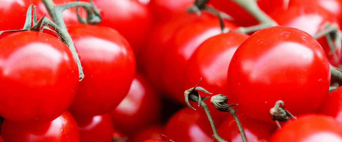 sembrar tomates