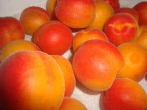 Variedades de Albaricoques - Galta roja