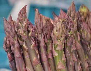 Variedades de Espárragos - Espárragos morados o violeta
