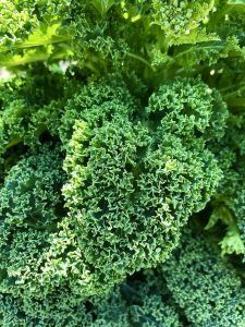 Variedades de Kale