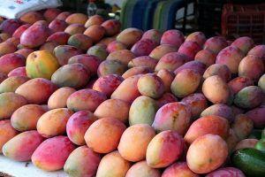 Variedades de Mango - Tommy Atkins