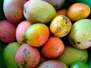 Variedades de Mango - Zill