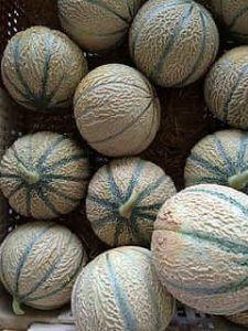 Variedades de Melones - Tendral
