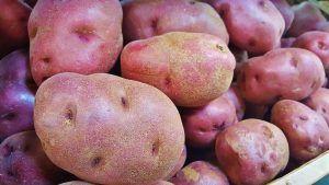Variedades de Patatas - Red Pontiac