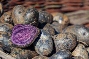 Variedades de Patatas - Vitelotte