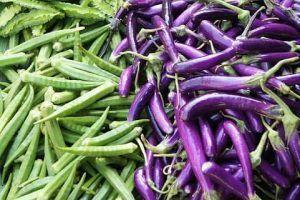 Variedades de berenjenas en forma alargada - Violeta larga palermitana