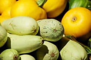 Variedades de calabacín más conocidas - Calabacines verdes claros