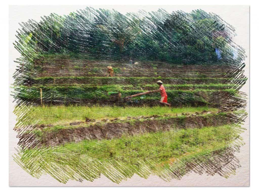 agricultura biodinámica 1