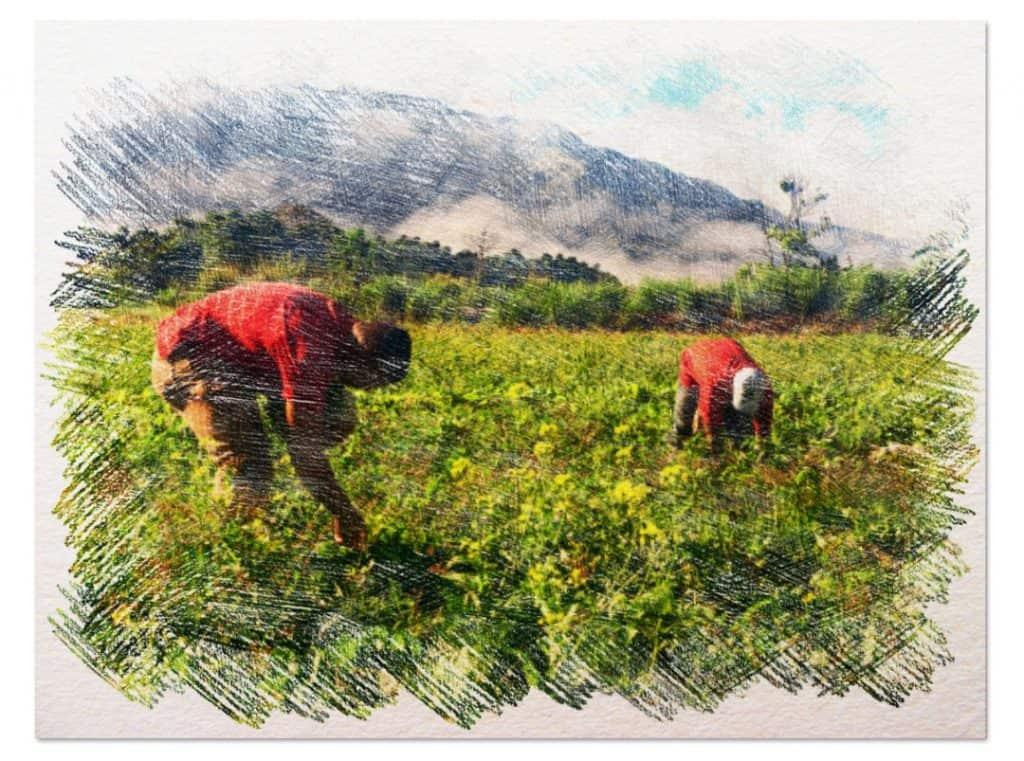 agricultura biodinámica 2