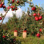 La Agricultura: Concepto, Tipos, Historia e Imágenes