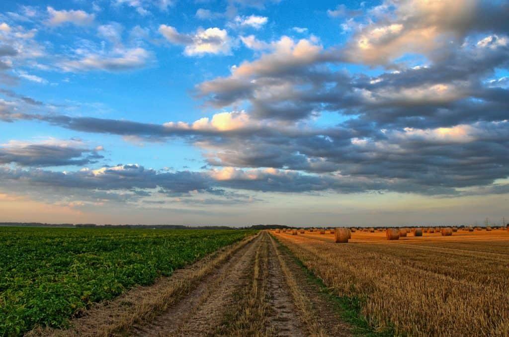 Agricultura qué es