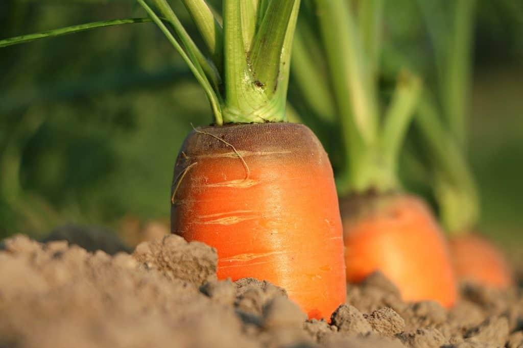 Agricultura funcionamiento