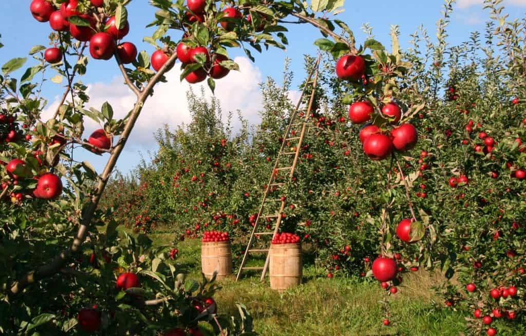 agricultura intensiva concepto