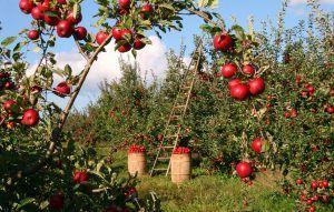 ¿Cuáles son las ventajas de rotar los cultivos?