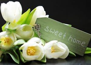alegrías del hogar plantas de interior que florecen todo el año