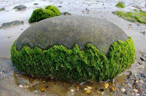 Algas y potasio
