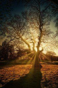 Qué aspectos debemos considerar en cuanto a la temperatura al trasplantar un árbol