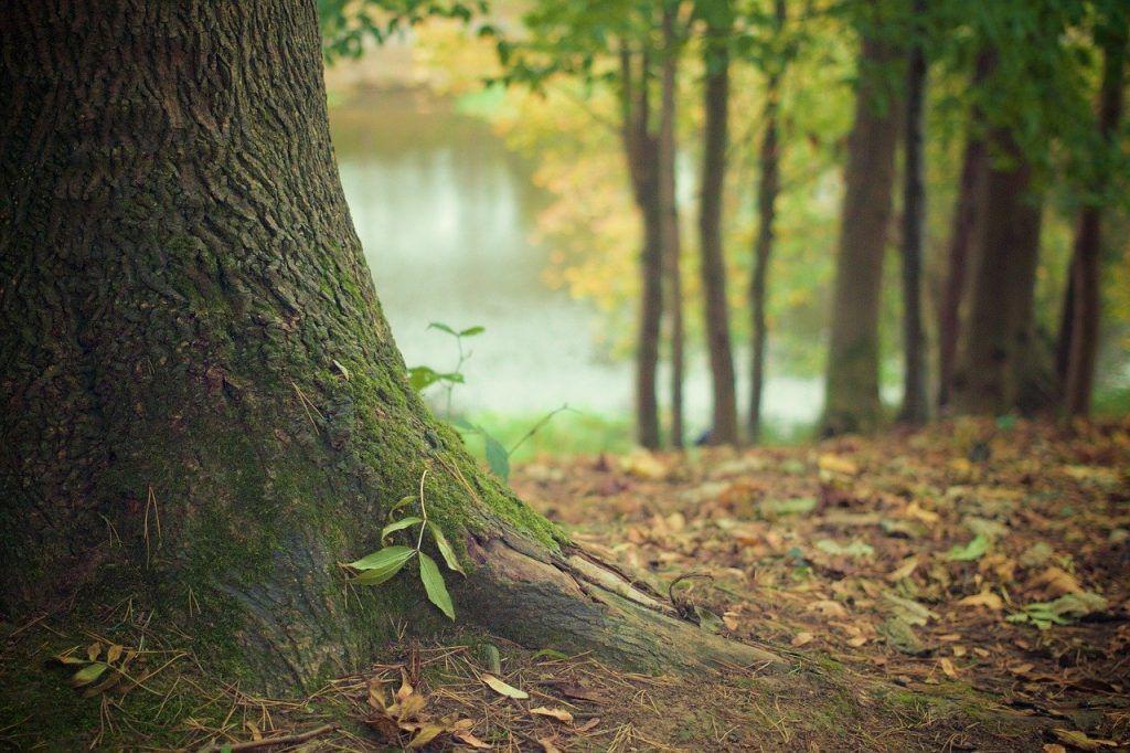 Qué significa plantar por esquejes