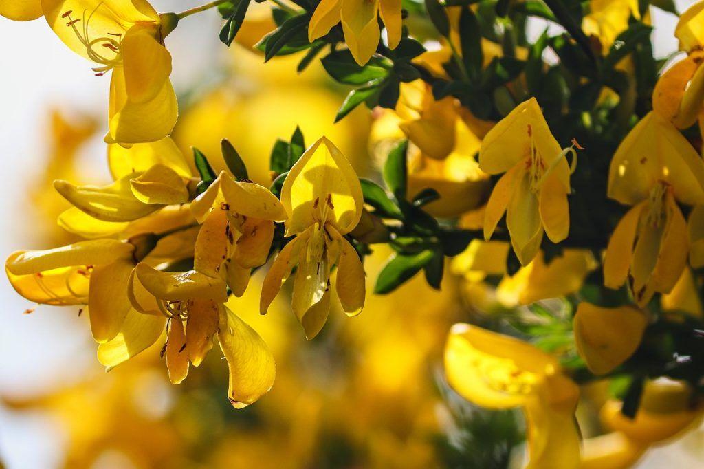 Arbusto, Mariposa