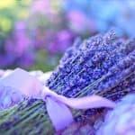 Listado de Plantas Aromáticas