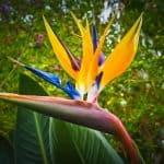 Las 33 Flores Bonitas más Comunes y Fáciles de Cultivar