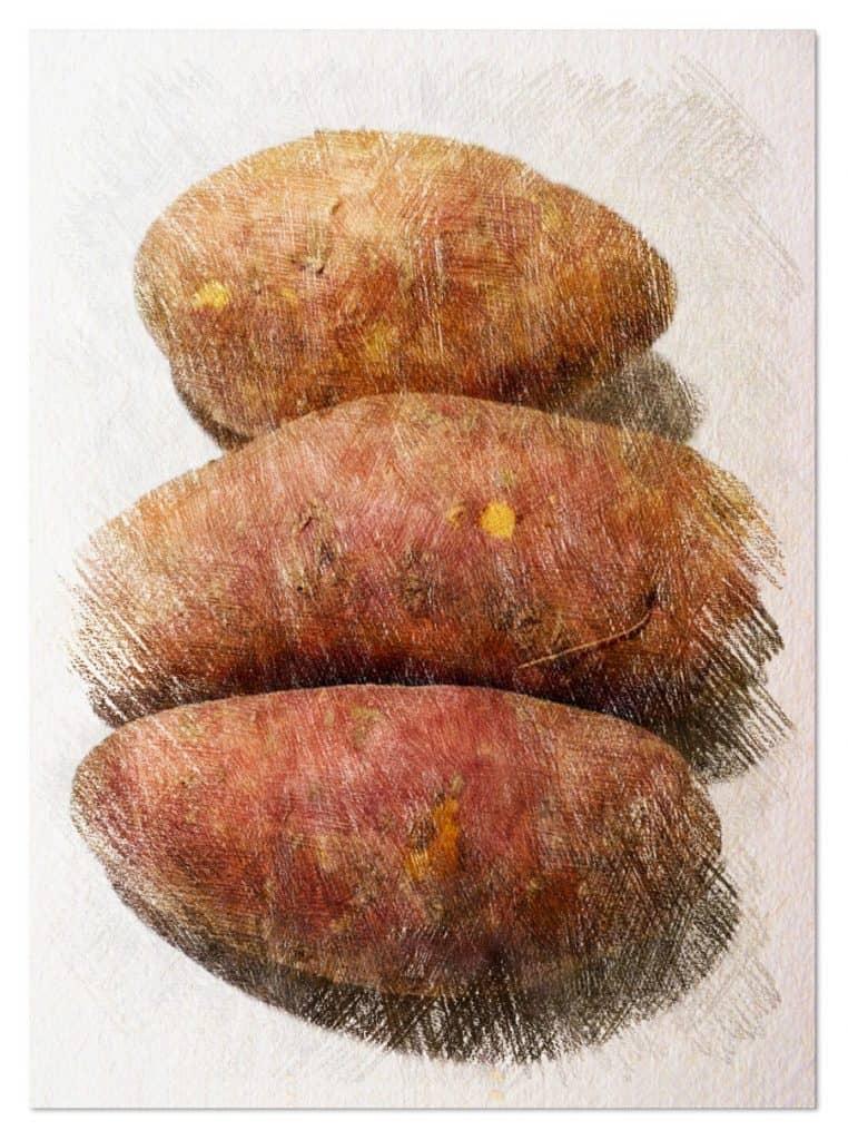 batata tubérculo