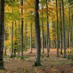 Bosque Caducifolio: [Concepto, Características, Fauna y Flora]