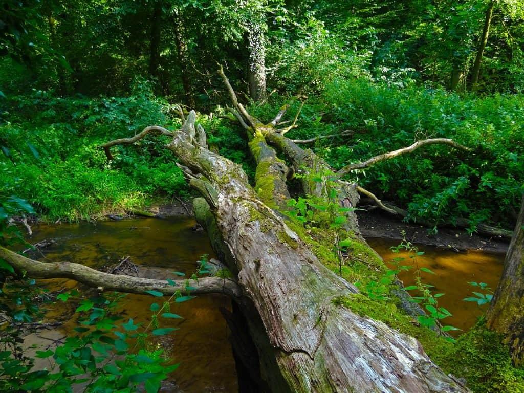concepto bosque caducifolio