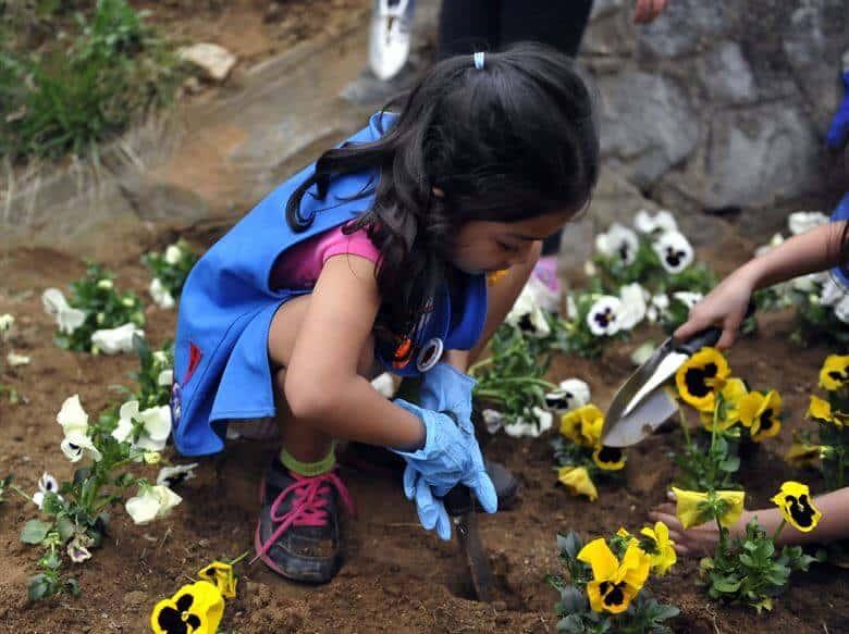 cómo sembrar flores