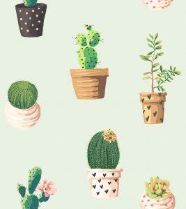 transplantar un cactus sin raíz