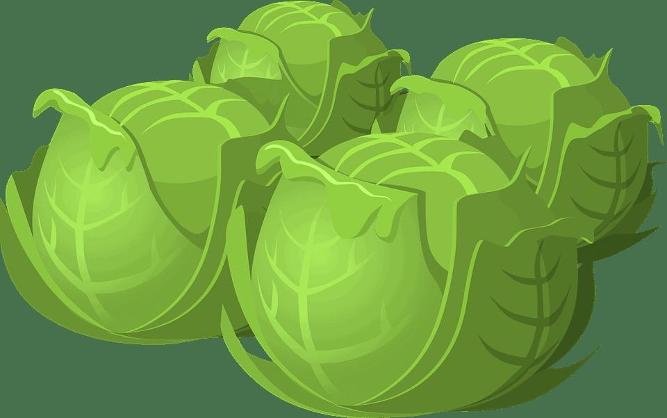 Sembrar Plantas: Cómo Cultivar y Hacer Crecer cualquier Planta en [13 Pasos]