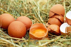 Cáscaras de huevo como abono para el huerto