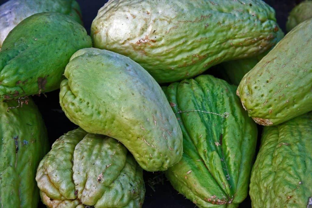 frutas tropicales chayote