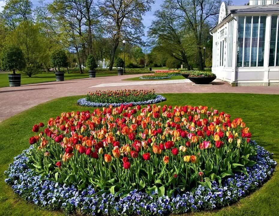cómo plantar tulipanes paso a paso