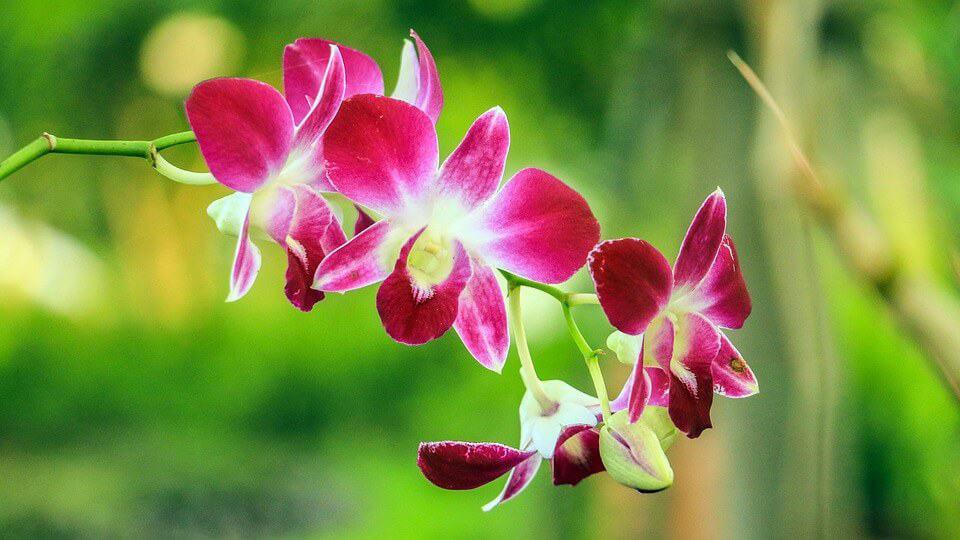 cómo regar orquídeas