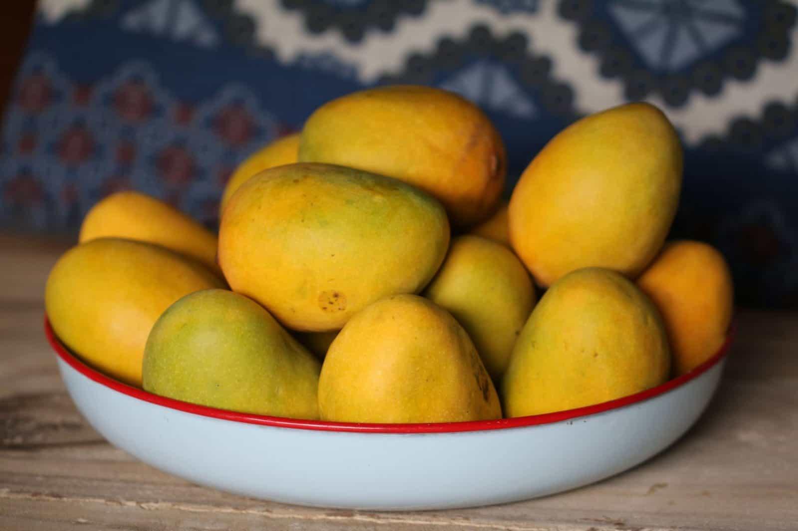 cómo sembrar mango