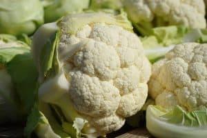 cómo cultivar coliflor