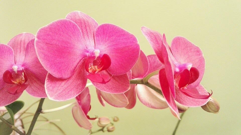 cuándo sembrar orquídeas
