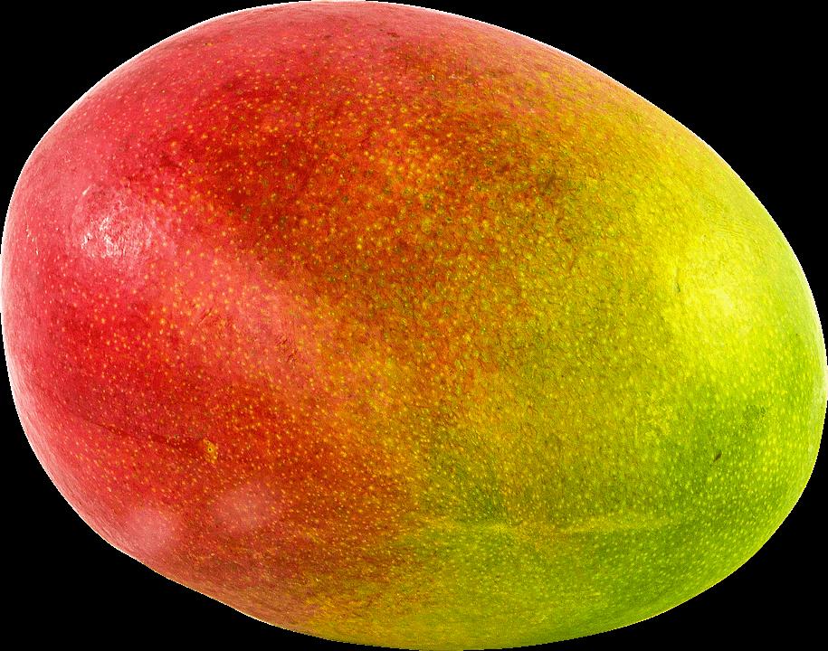 cultivar árbol de mango