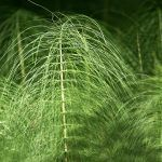 Agricultura Biodinámica: ¿Qué es? ¿Realmente Funciona?