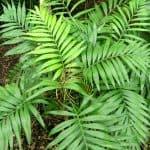 Las [15 Mejores] Plantas de Interior Duraderas y Resistentes