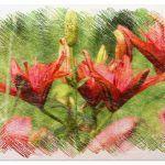 Plantas Ornamentales: [Siembra, Tipos, Riego y Cuidados]
