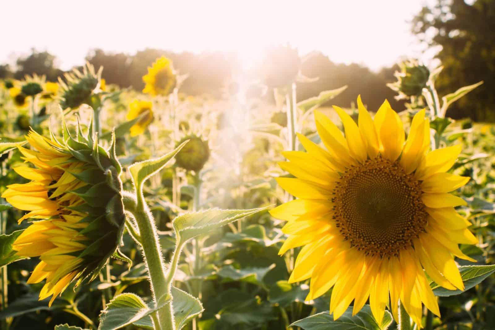Cómo Sembrar Flores en tu Jardín: [Guía Completa]