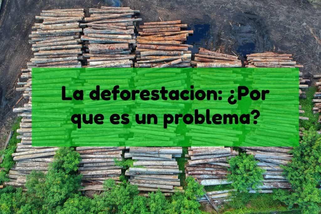 deforestación problema