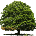 Cómo Sembrar Árboles: La Guía que Necesitas para conseguirlo en 12 Pasos